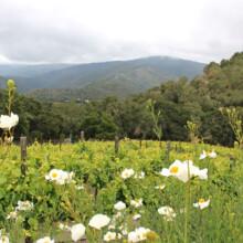 Carmel Valley Blogger Retreat